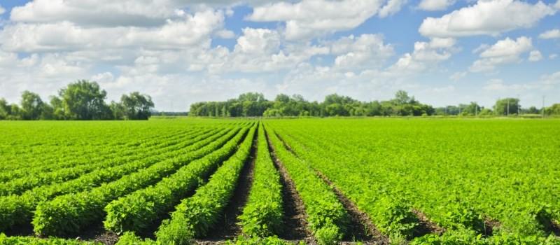 bio-agriculture
