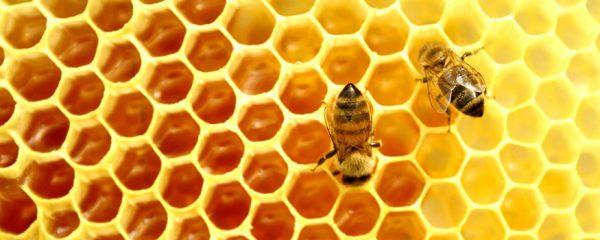 Μέλισσες σε κυψέλη